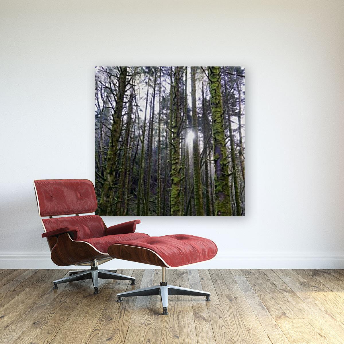 Trees of the Killarney National Park Co. kerry Ireland Europe 2018  Art
