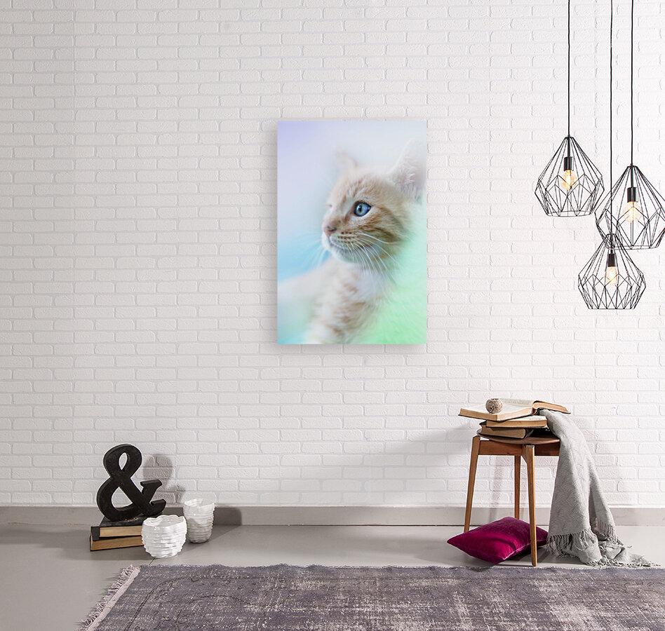 catshadow  Art