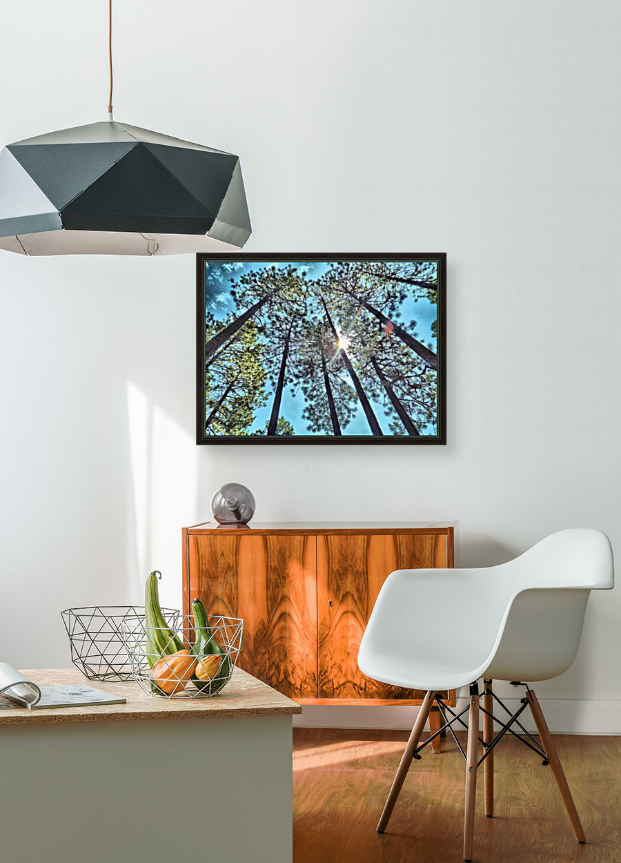 Tree Tops with Floating Frame