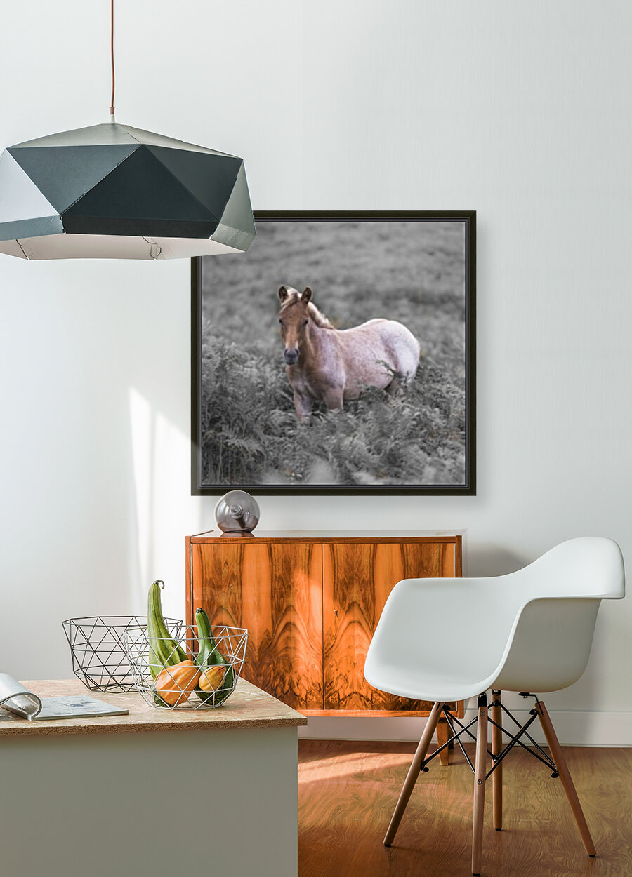 Wild Horses, New Forest with Floating Frame