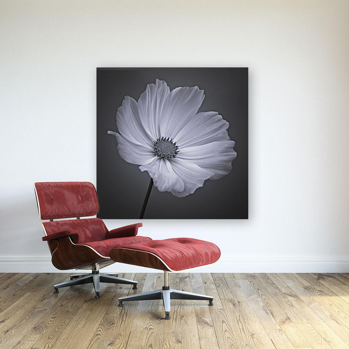 Cosmos flower  Art