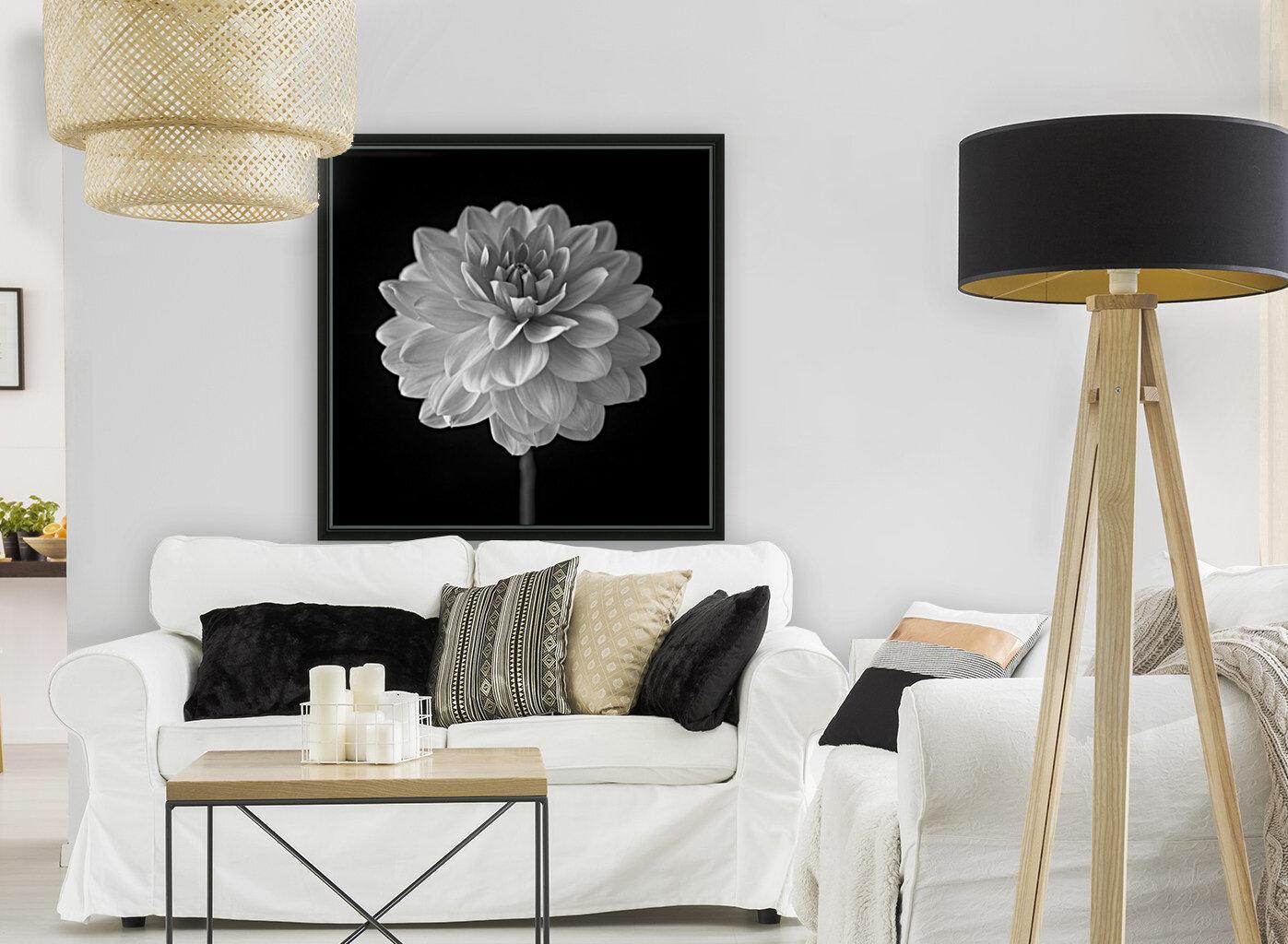 Dahlia flower on black background  Art
