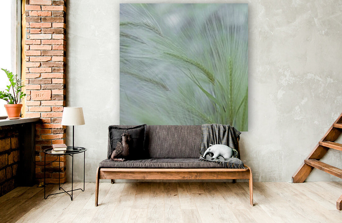 Wild grass Foxtail Barley with Floating Frame