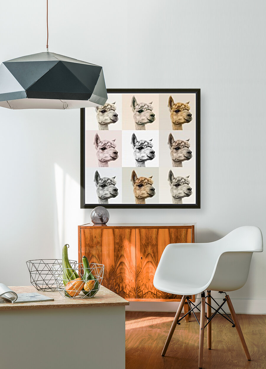 Collage of Alpacas in multicolour with Floating Frame