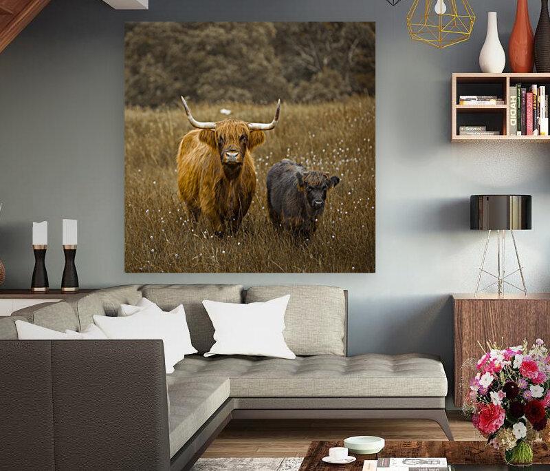 Highland Cows  Art