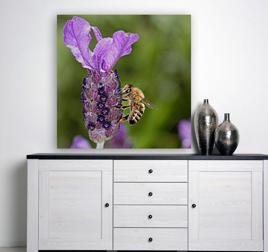 Bee On Lavender  Art