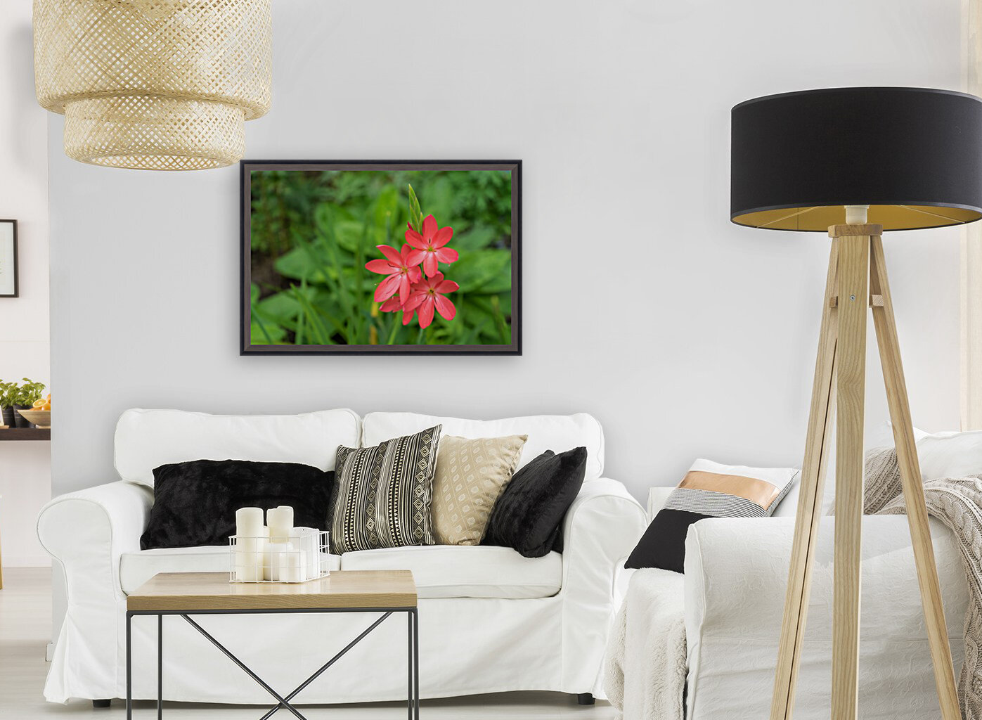 Three Bold Pink River Lily Blooms - Exotic South African Beauties in a Garden  Art