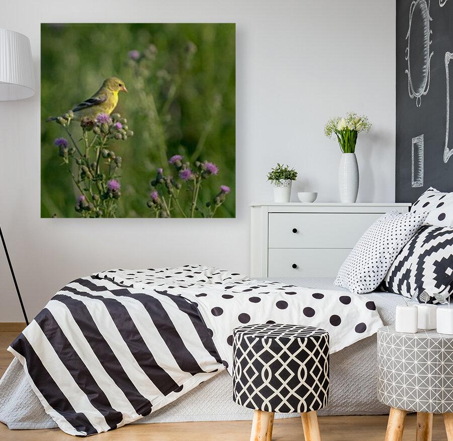 Goldfinch Female  Art