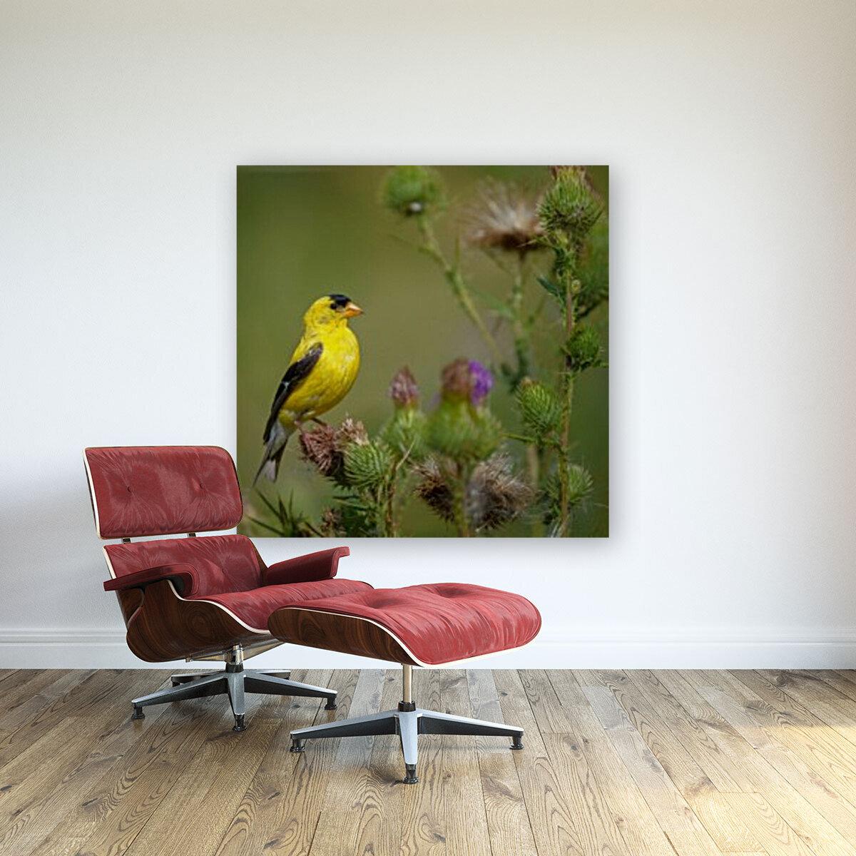 Goldfinch Male  Art