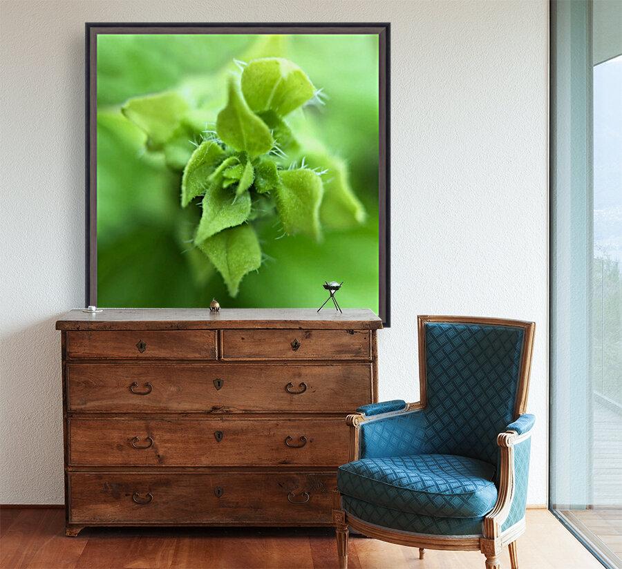 24_Green_Plant_6772_SQUARE  Art