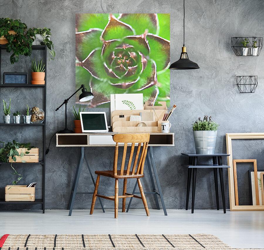 20_Green Succulent Perennial - Verte Vivace_9780_CLEAR SQUARE  Art
