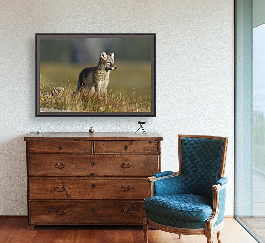 Arctic Fox Puppie by Karen Kolbeck   Art