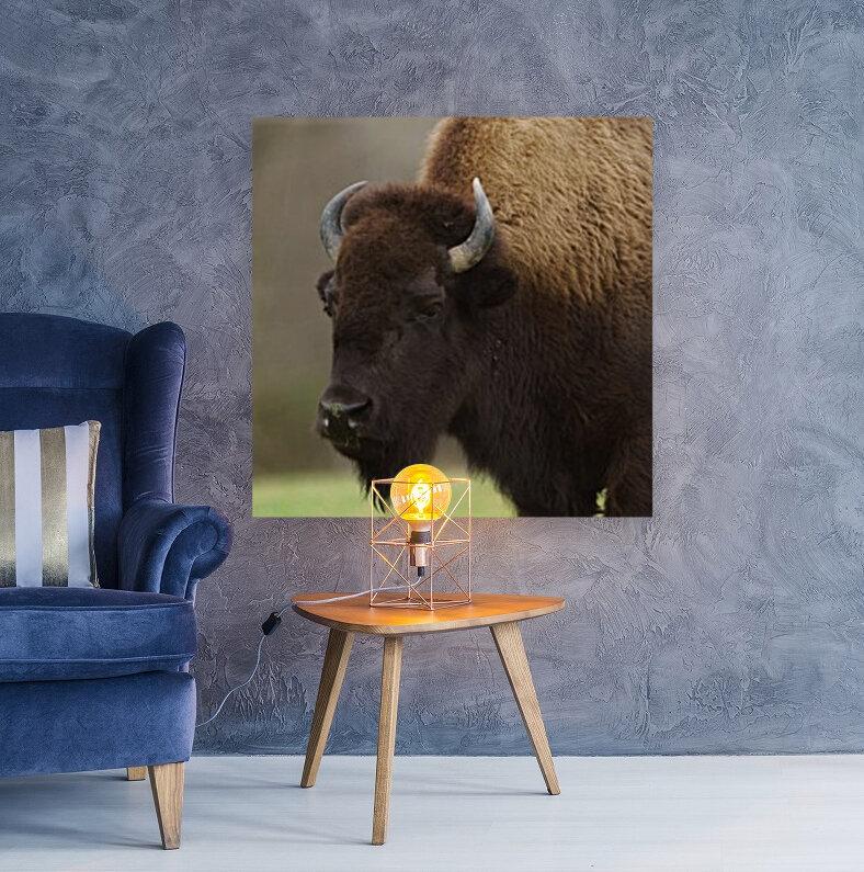 North American Buffalo  Art