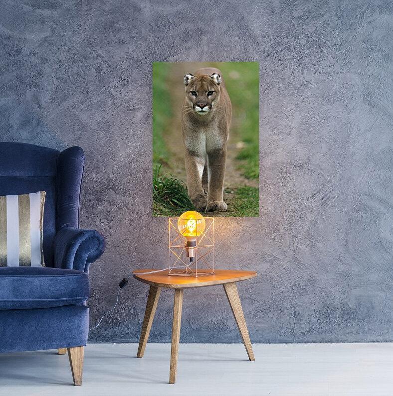 North American Cougar  Art