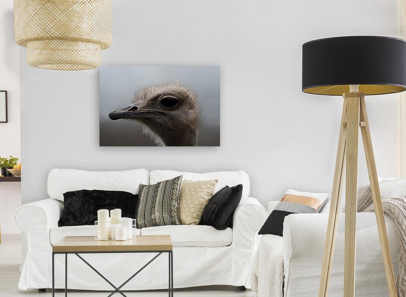 Ostrich  Art