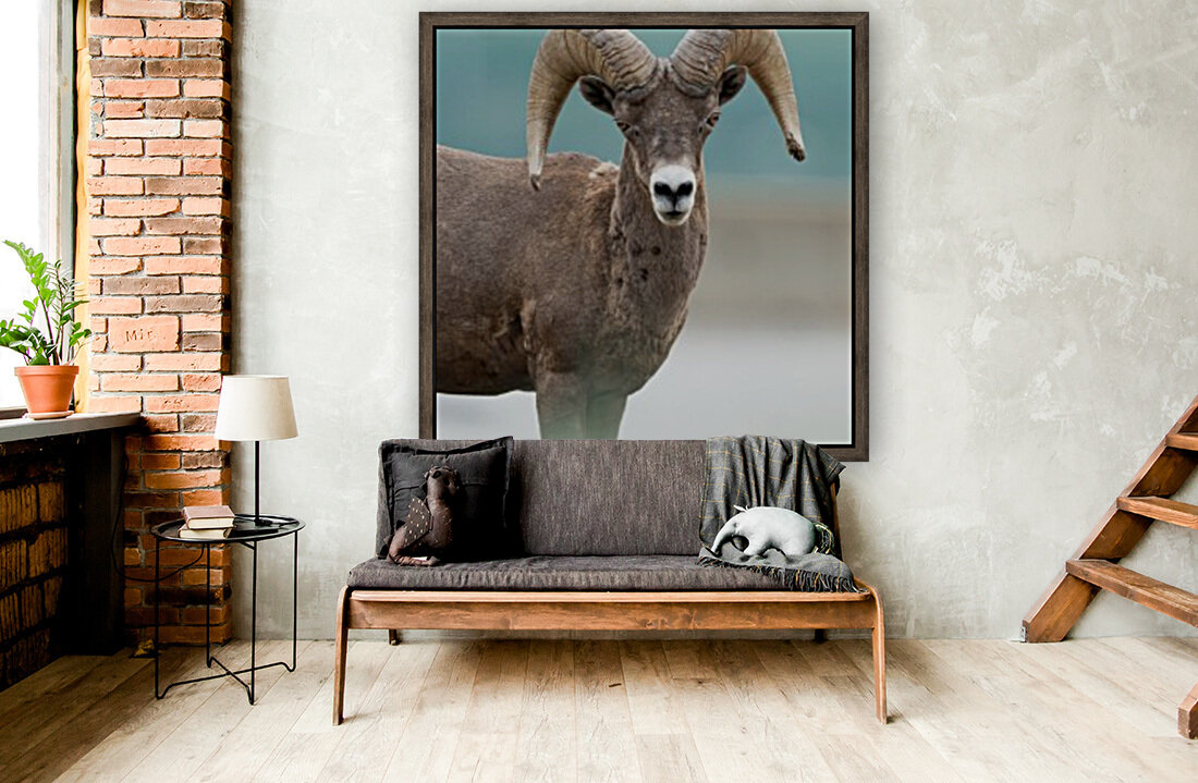 Bighorn Sheep  Art