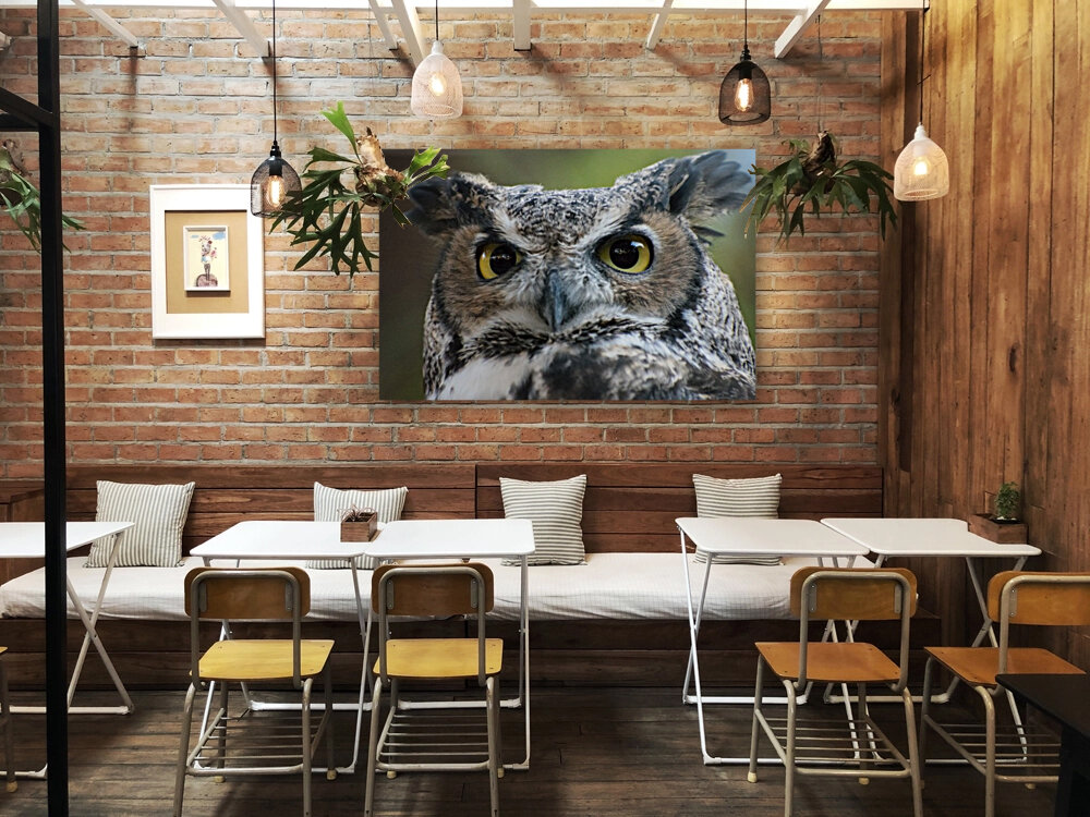 Owl  5 with Floating Frame