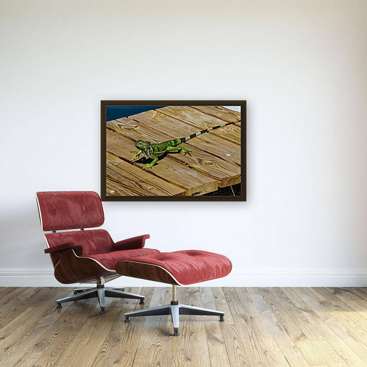 Cayman Green Iguana On Alert  Art