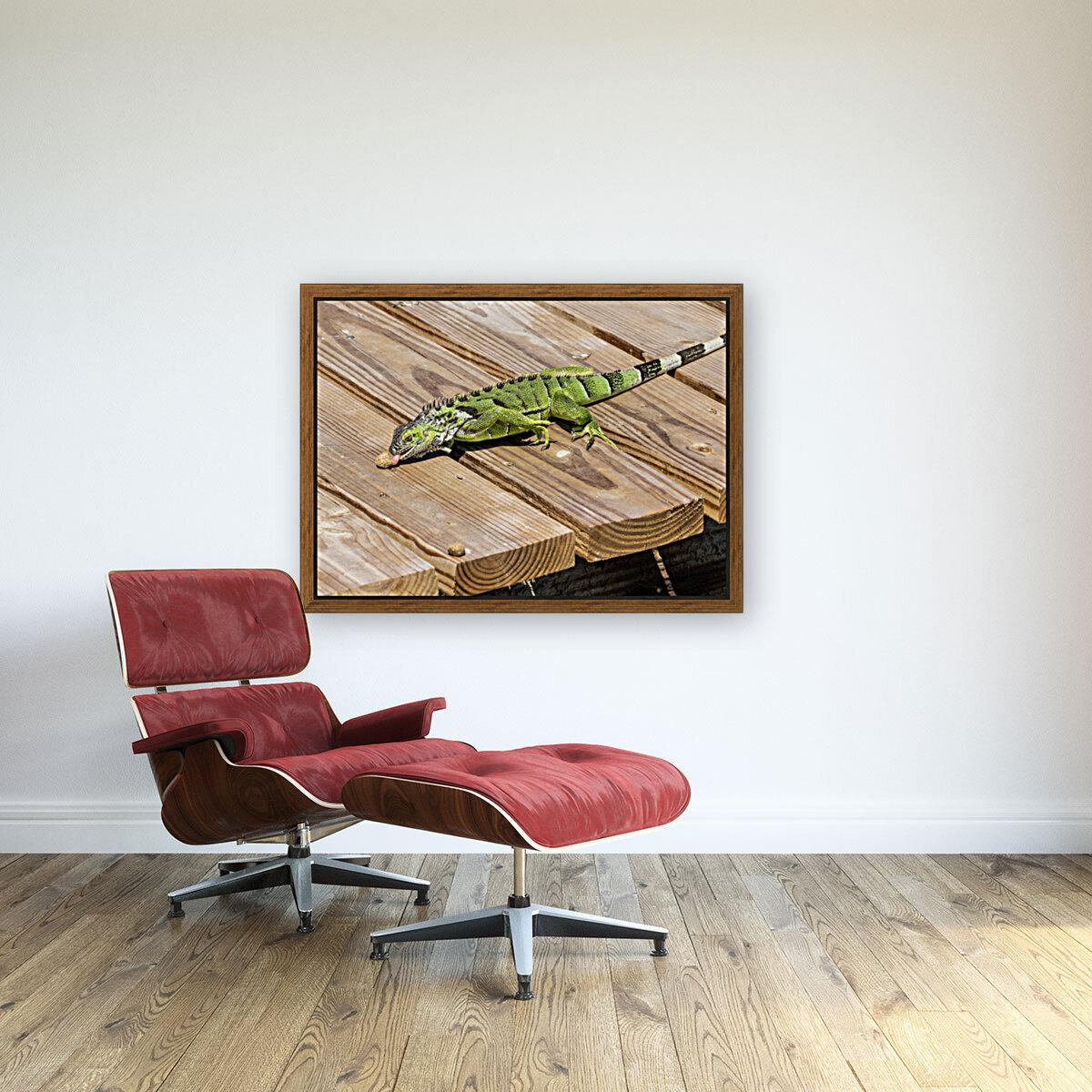 Cayman Green Iguana Snacking  Art