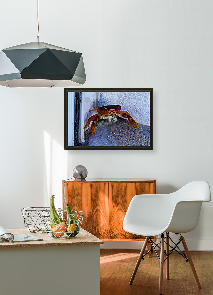 Cayman Cornered Crab  Art