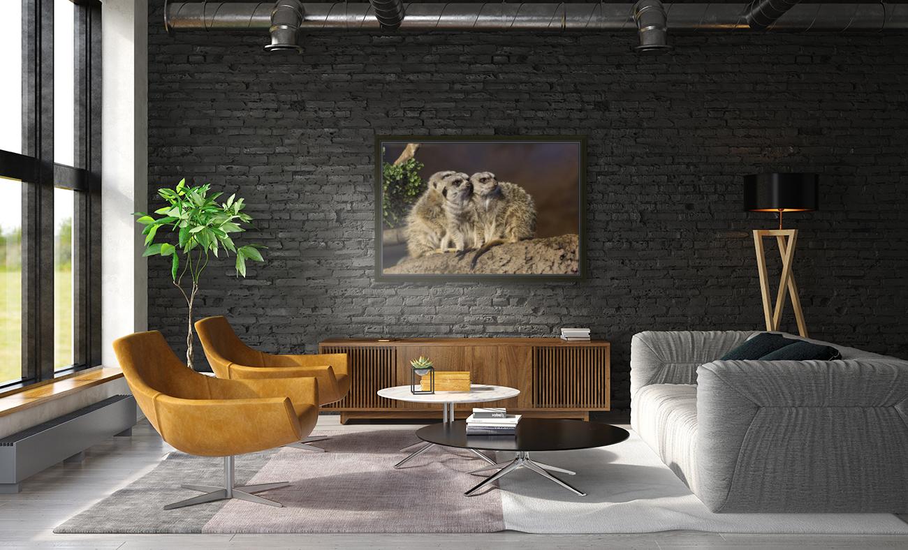 Take Watch  Meerkats   Art
