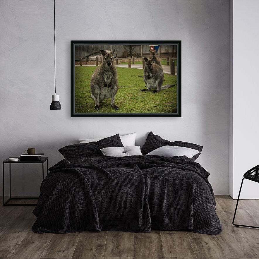 Intriguing   Wallaby   Art