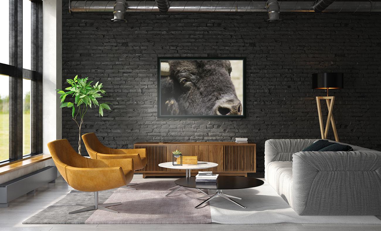 Reflection of a Buffalo  Art
