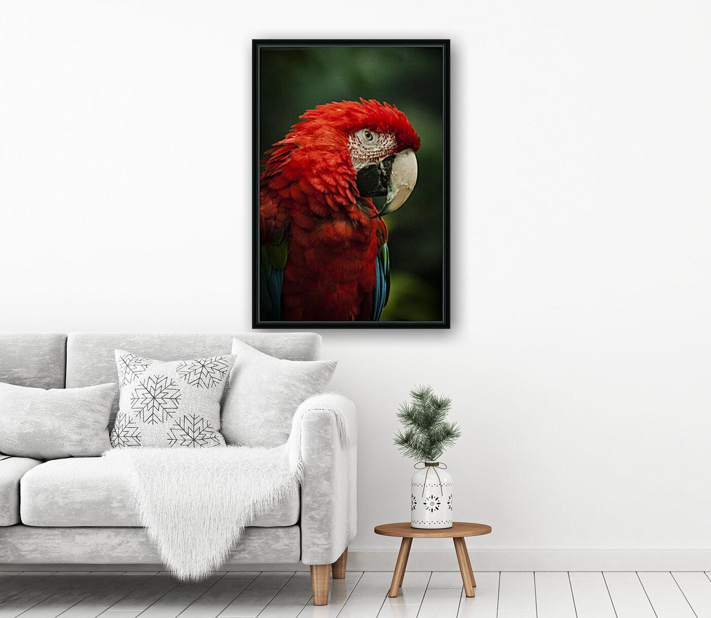 Parrot Portrait  Art