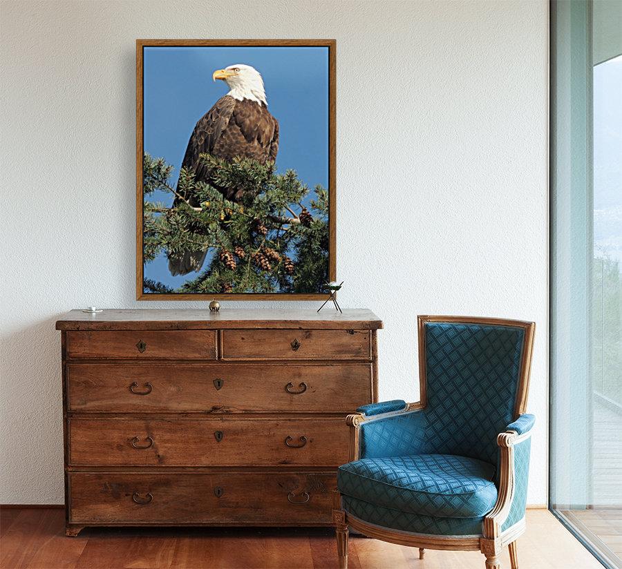Bald Eagle at Herring Season   Art
