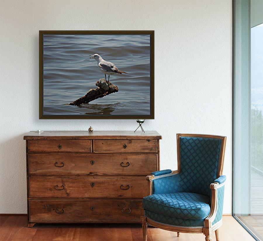 Ring-billed Gull  Art