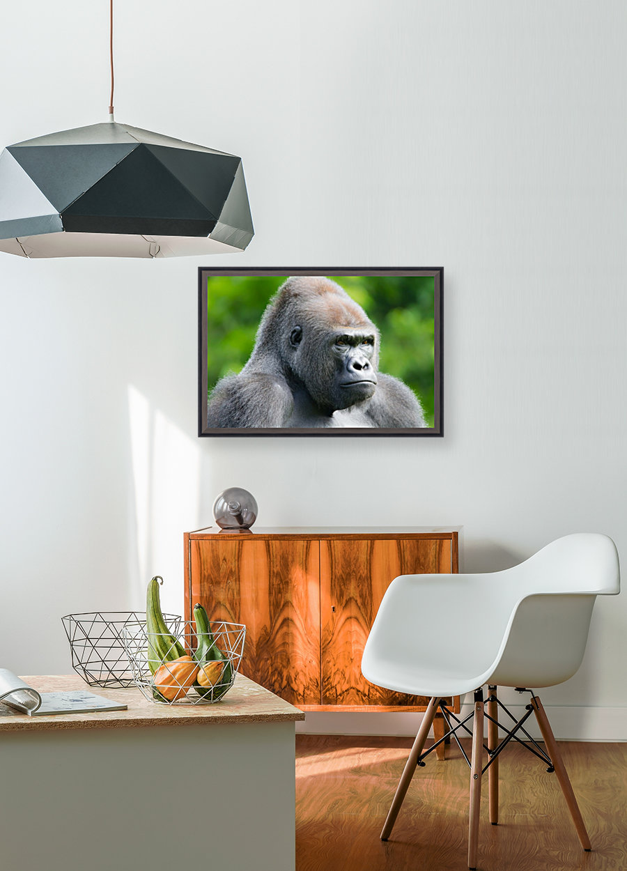 Gorilla with Floating Frame