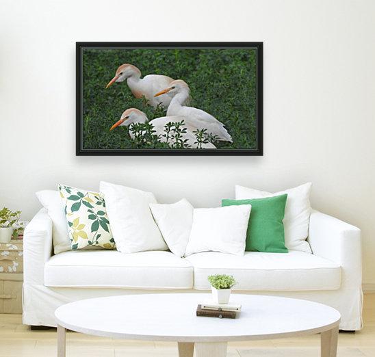 Cattle Egrets  Art