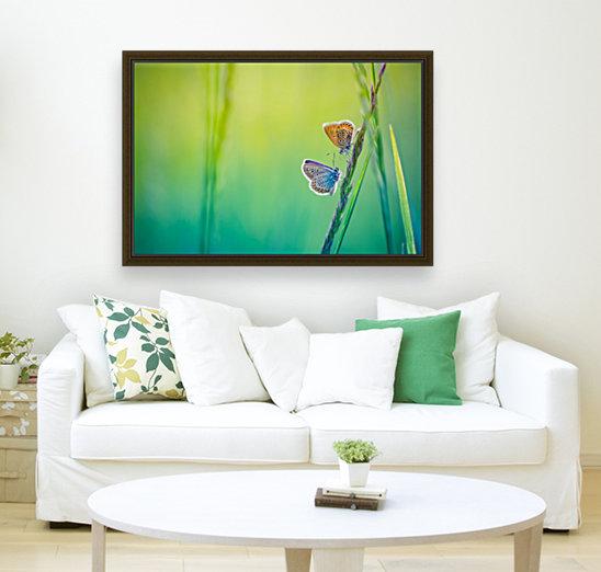 Butterfly summer background  Art