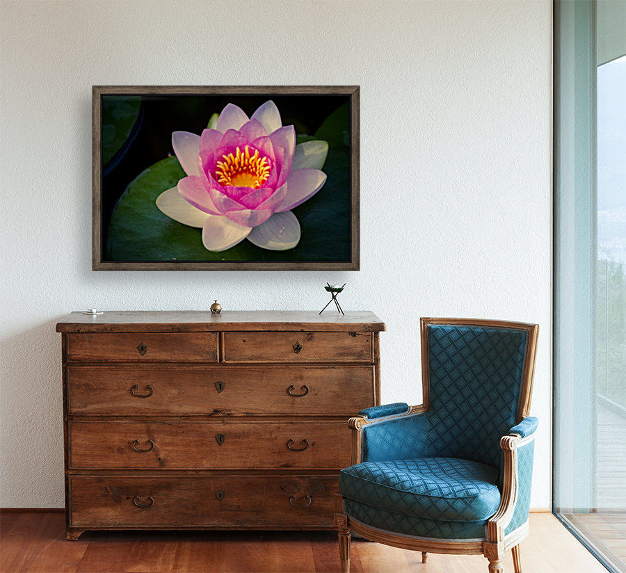Water lily  Art