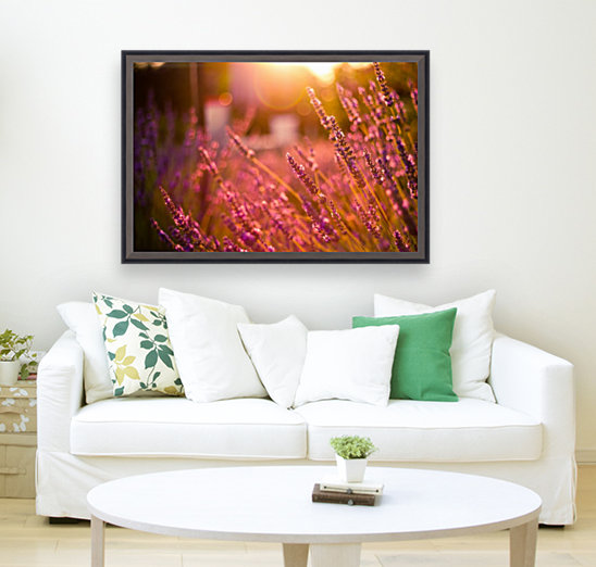 Sunset lavender flowers  Art