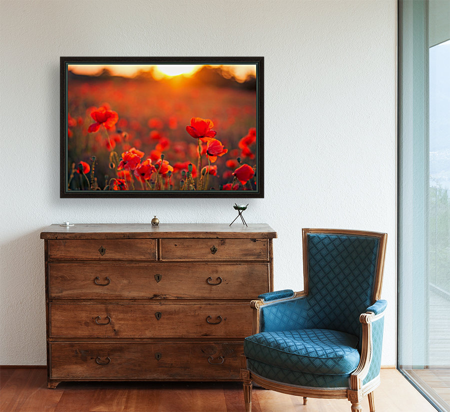 Beautiful Sunset poppy flowers  Art