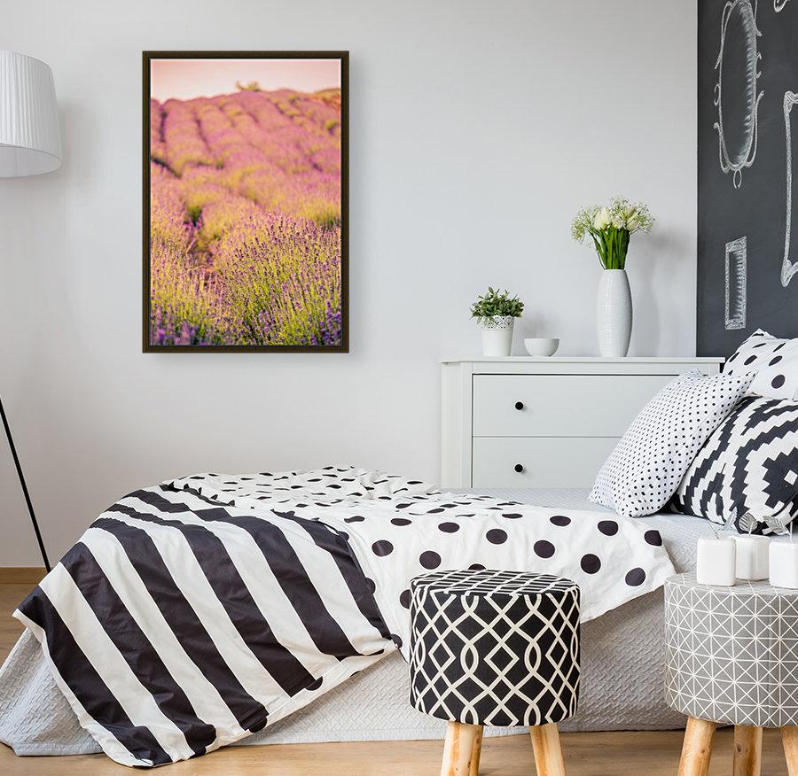 Beautiful Sunset lavender flowers on a field  Art