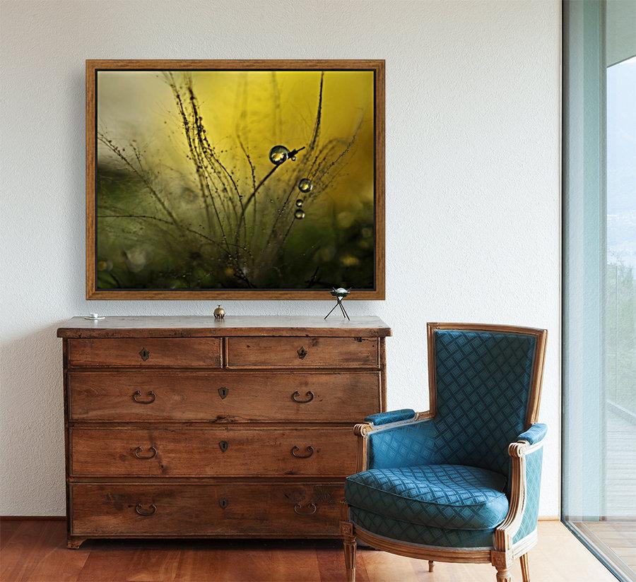 A golden morning shower  Art