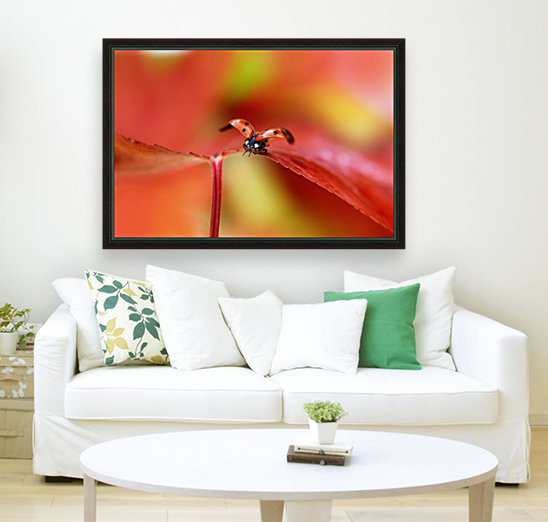 Ladybird in autumn with Floating Frame