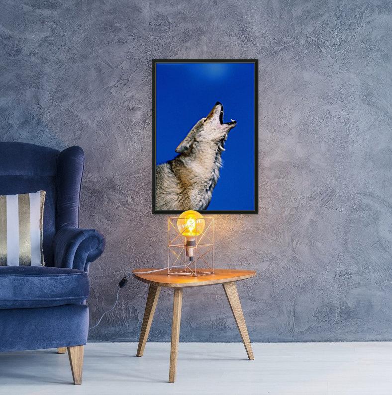 Howling Coyote  Art