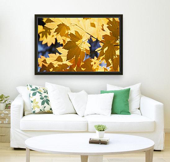 Vine Maples Leaves In Autumn  Art