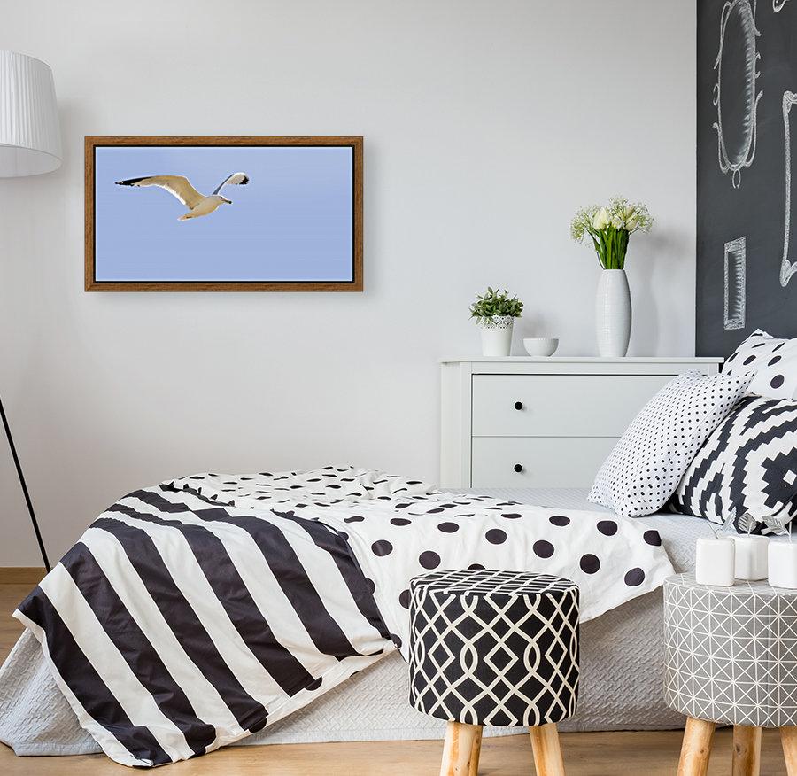Seagull In Flight  Art