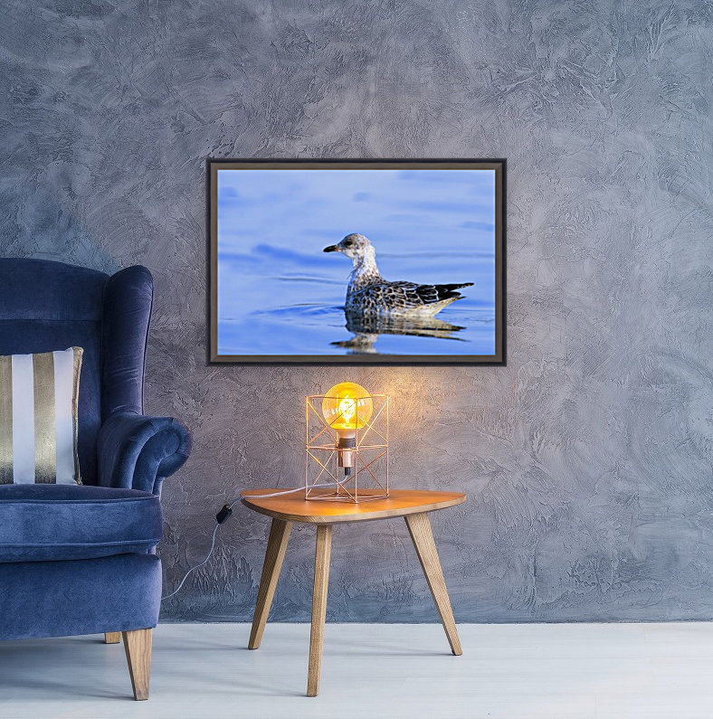 Young Gull Swimming  Art