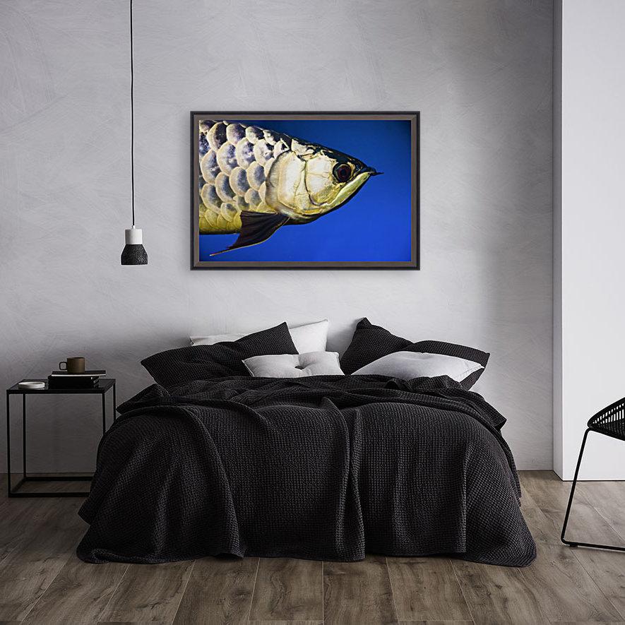 Closeup Of A Fish  Art