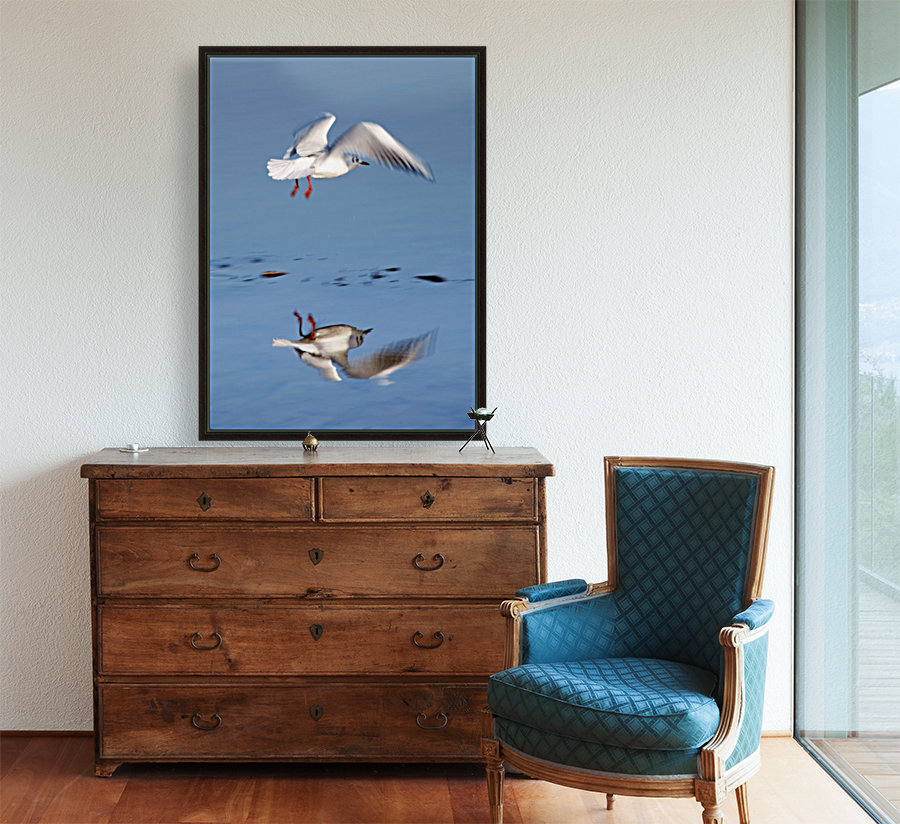 Bird Landing with Floating Frame