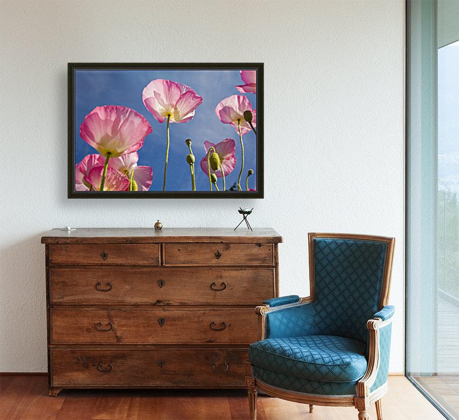 Shirley Poppies  Art