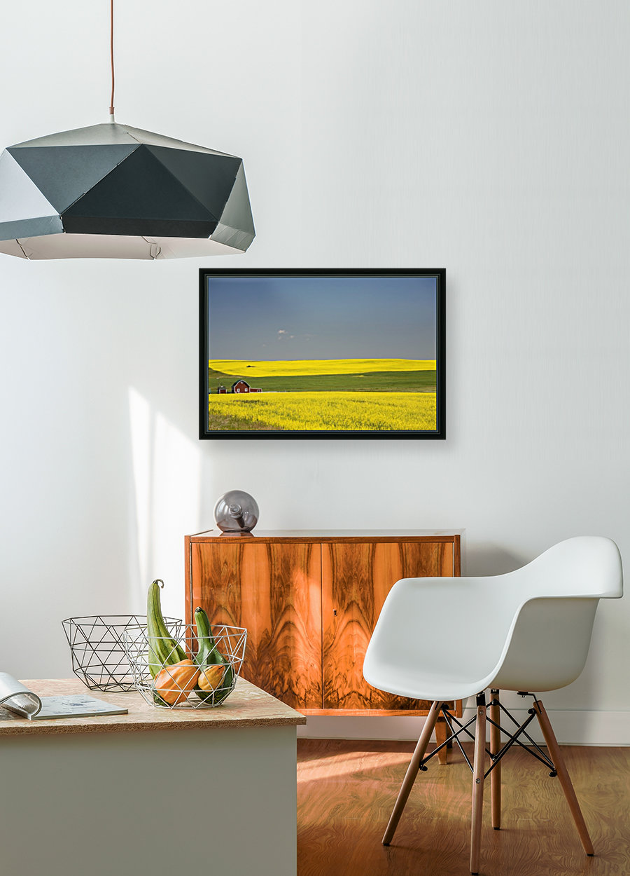 Flowering Canola Fields And A Red Barn; Alberta, Canada  Art