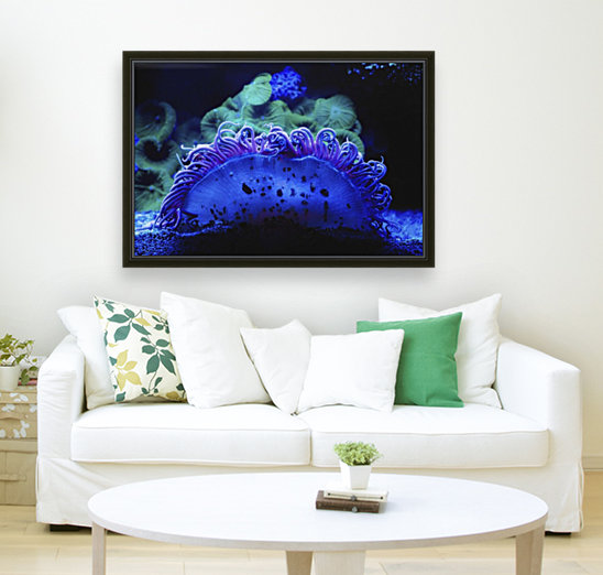 Blue coral underwater;Israel with Floating Frame