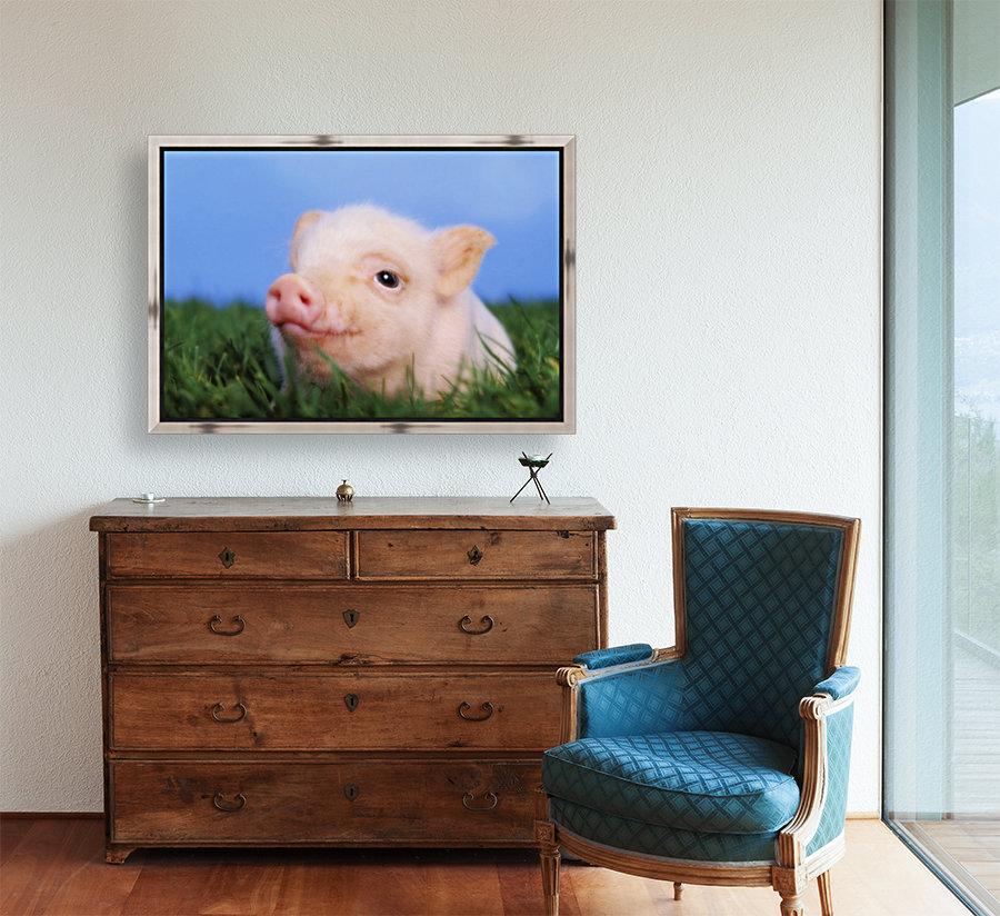 Baby pig lying on grass;British columbia canada  Art