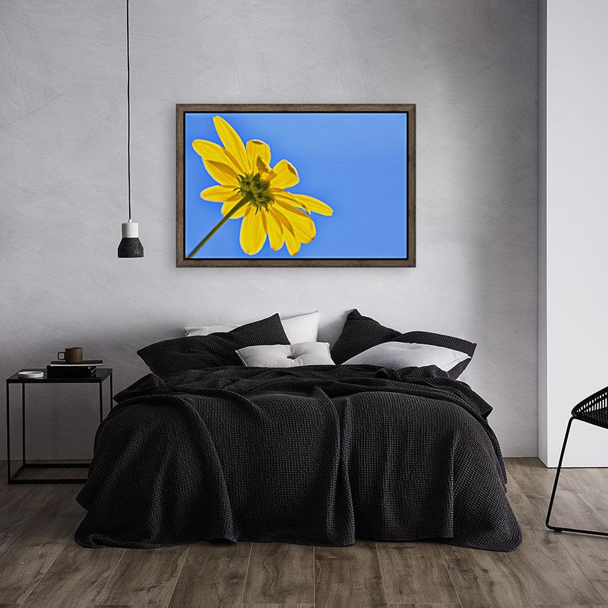 Yellow flower against a blue sky; Bolivia  Art